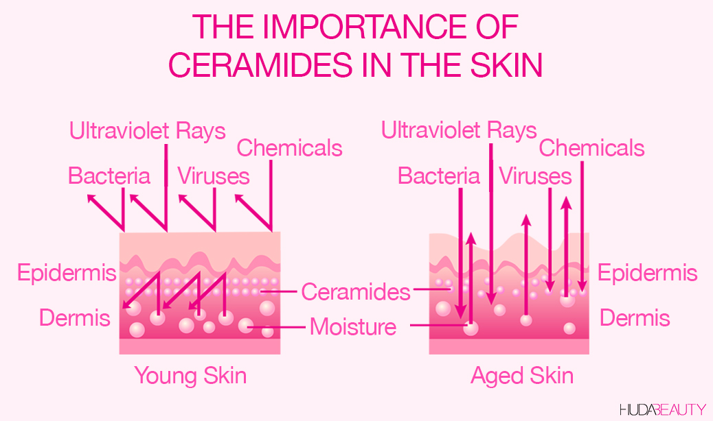 The importance of ceramides in the skin