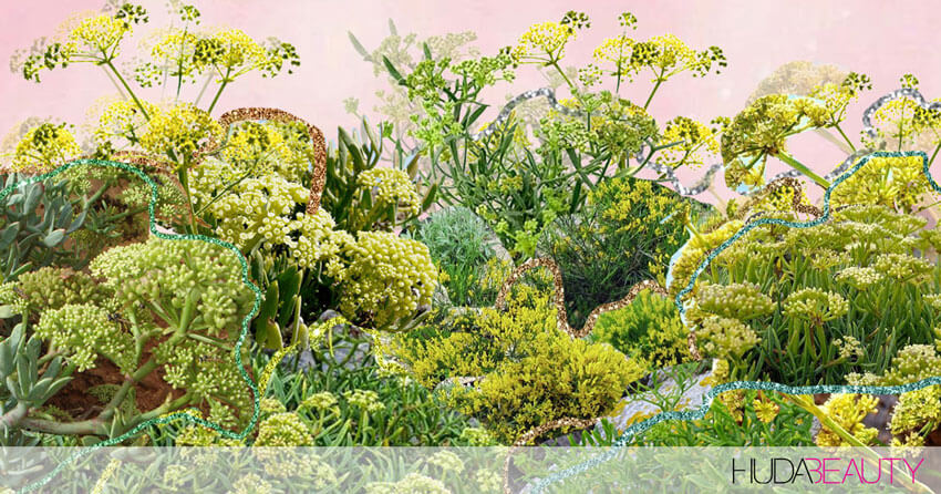 Sea Fennel Is The Bomb Skincare Ingredient You Need In Your Routine
