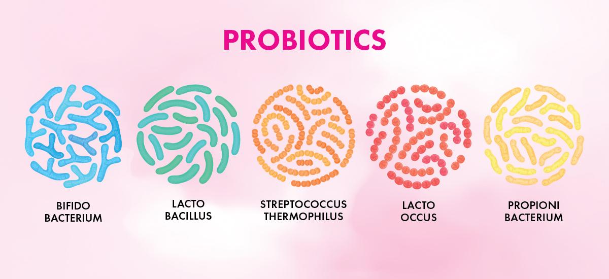 Probiotics-Types